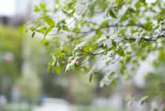 季節の街路樹