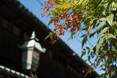 秋日和 (2)