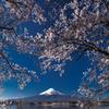 富士と桜③