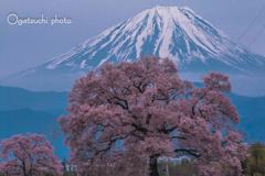 富士と桜①