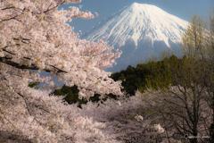 富士と桜⑤