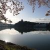 犬山城と桜Ⅹ