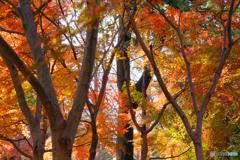 染まりゆく森の木々