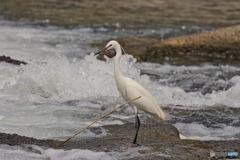 水辺の鳥たち③
