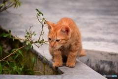 ペナン島・極楽寺のネコ