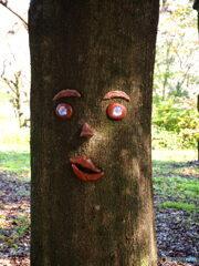 木の顔(昭和記念公園)
