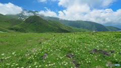 鳥海山お花畑