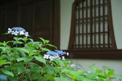 梅雨時、京都1