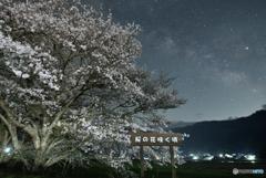 桜の花咲く頃