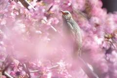 春~~~ぅ