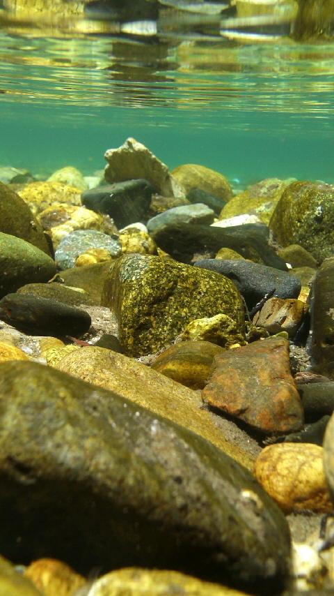 上高地 水中撮影