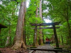 新緑の滝尾神社