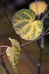 ふらり散歩  枯葉模様