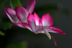 奥さんのお庭 今、咲く・・