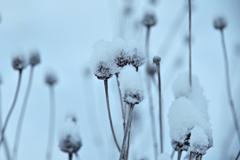 ふらり散歩 雪の匂い