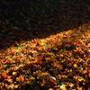 ふらり散歩 深秋彩