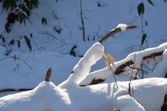 ふらり散歩  雪、白く  No.2