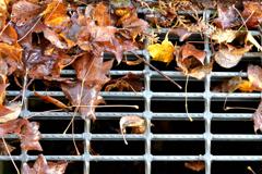 ふらり散歩 道端の秋