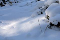 ふらり散歩  雪、白く      No,1