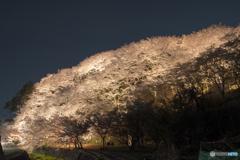 荒神山桜公園のライトアップ2