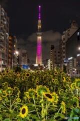 東京パラリンピック聖火リレー ライトアップ
