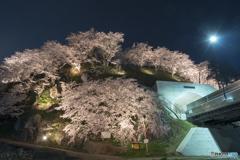 荒神山桜公園のライトアップ