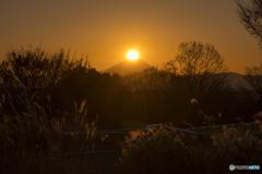 昭和記念公園からのダイヤ富士