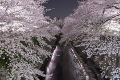 神田川のライトアップ2