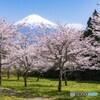 常灯ヶ峰の桜