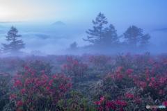 霧煙る高原