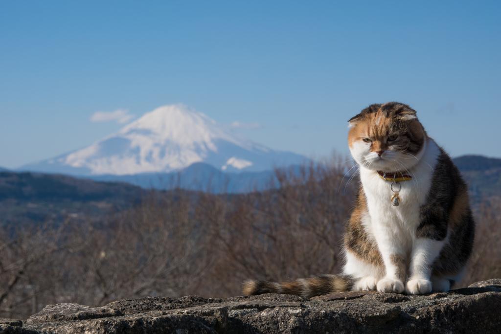 吾妻山公園のチャミちゃん