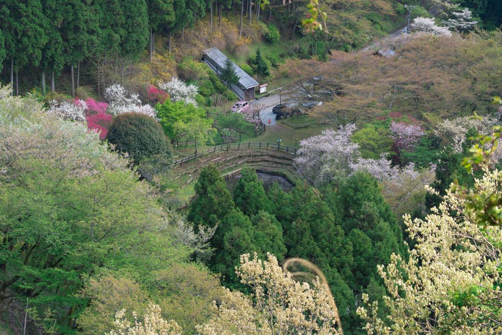 春の松田町