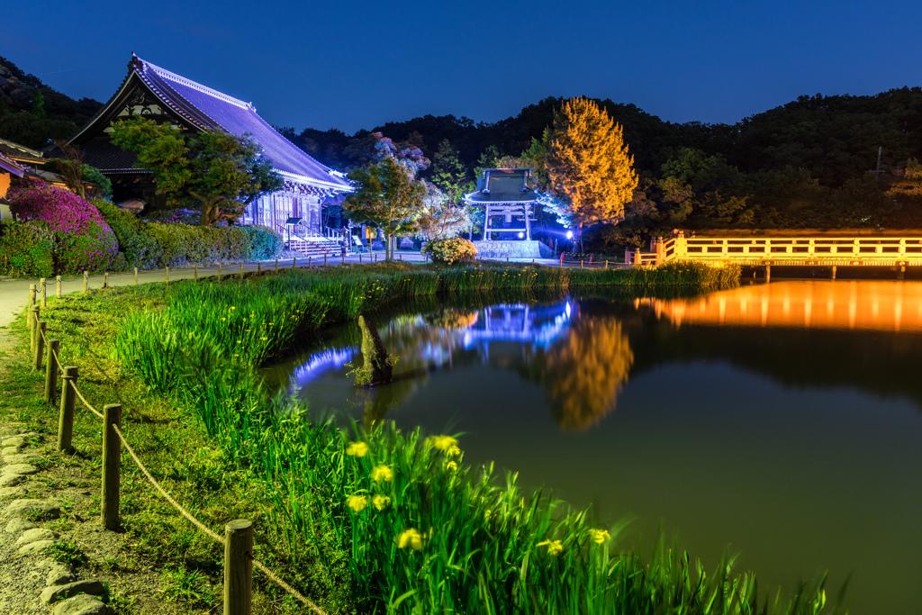 2017 GW 称名寺ライトアップ