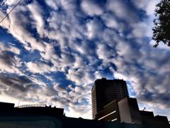 9/20 朝の空。