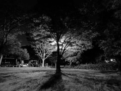 monochrome #54