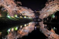 松川の夜桜 2016