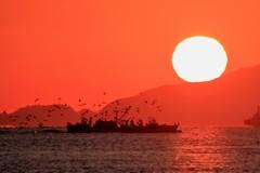 日の出とカモメを引き連れた漁船
