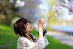 COTOと桜