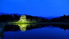 向野のエドヒガンと宵の空