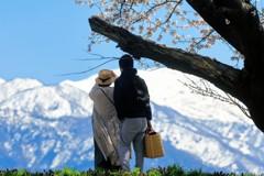 桜の木の下で  ピクニックバスケット