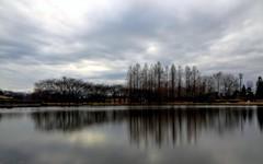 メタセコイアのある池