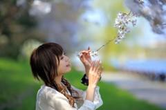 桜に惹かれる