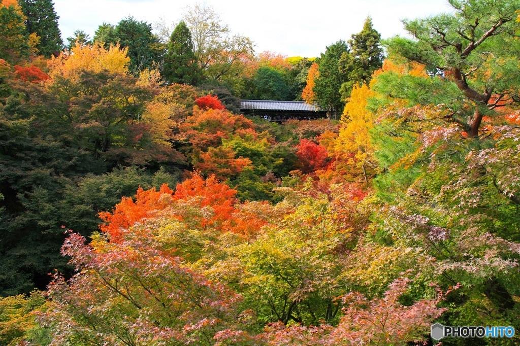 紅葉の東福寺