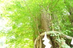 大国魂神社の大イチョウ