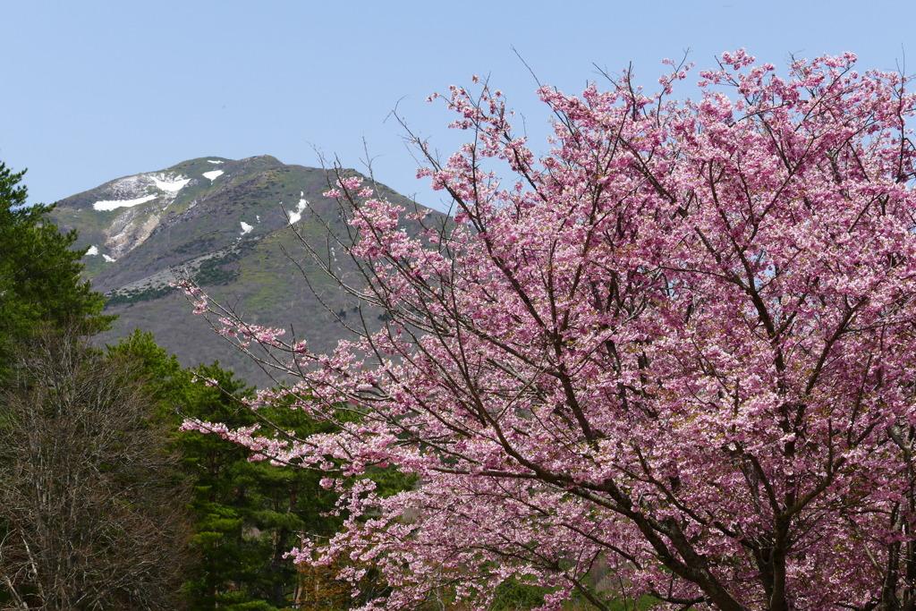 山桜と 2