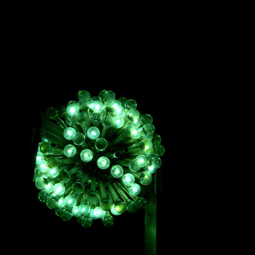 bloom of bulb