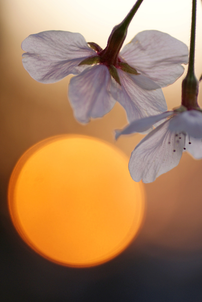 桜と光 3