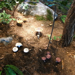 Doubtful mushroom