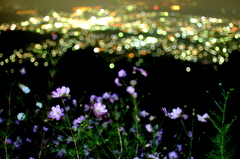 Night & Flower