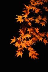 紅葉、ライトアップ